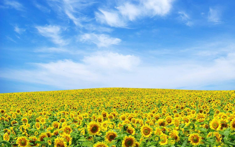 groupe électrogène huile végétale gelec energy